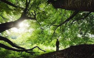 Çevre Temizliği ve Denetimi Nedir, Çevre Temizliği ve Denetimi Ne İş Yapar, Çevre Temizliği ve Denetimi Maaşları