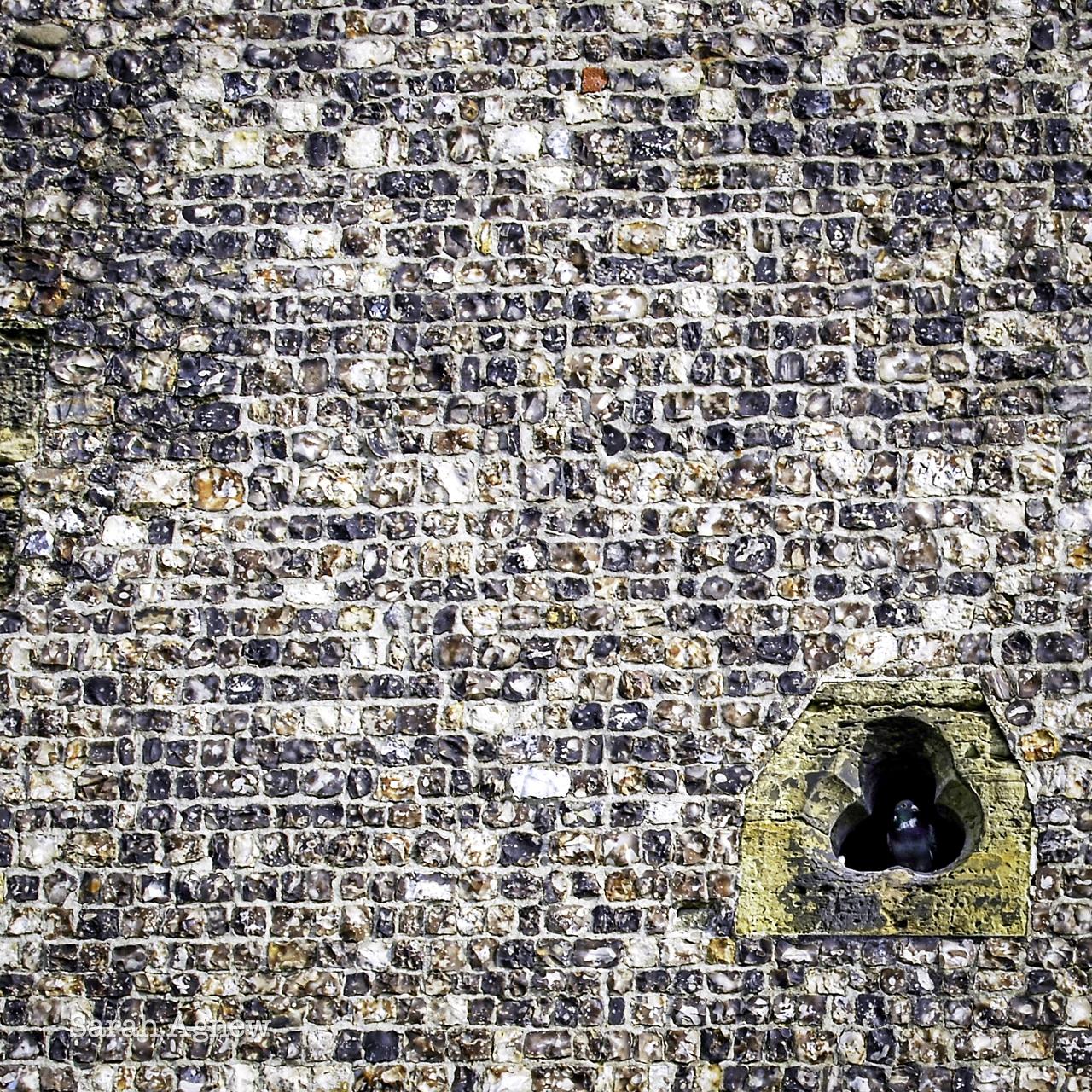 Pigeon in flint wall at St Nicholas church, Brighton