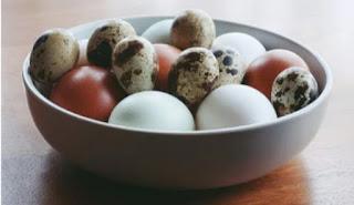 ovos de Codorna cozido