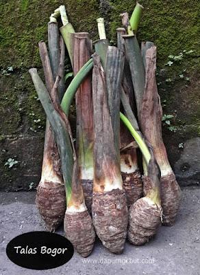 hutan sumber pangan