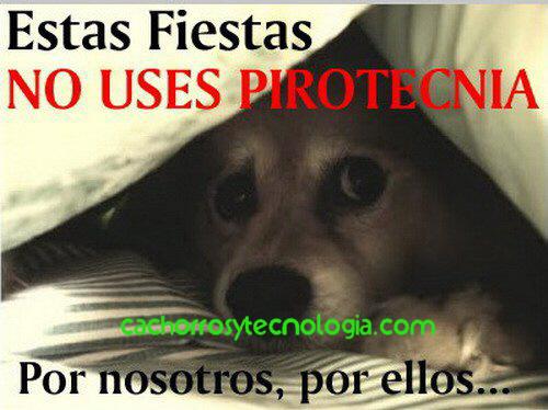 NO PIROTECNIA PERU ESPAÑA USA EUROPA PETARDOS INCENDIOS SUFREN ANIMALES DOG PUPPY FIRECRACKER 2