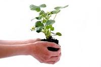 World Environmental Day June 5 Image