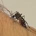 Cinco bairros de João Pessoa concentram infestação local de Aedes aegypti; veja lista