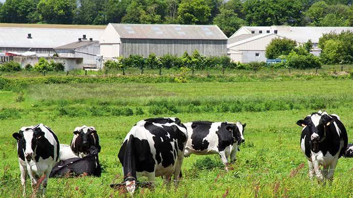 Établissement d'un parcours fourrager pour le bétail