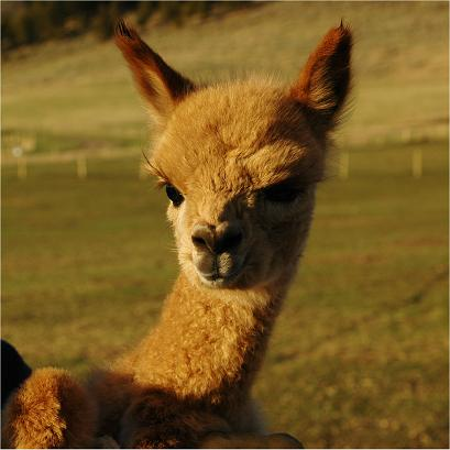 Alpaca markets cryptocurrency trading hours