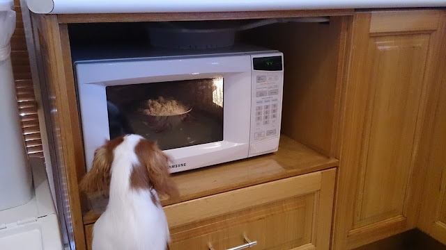 puppy head peers through the closed microwave door, which is lit up with a bowl of rice inside.