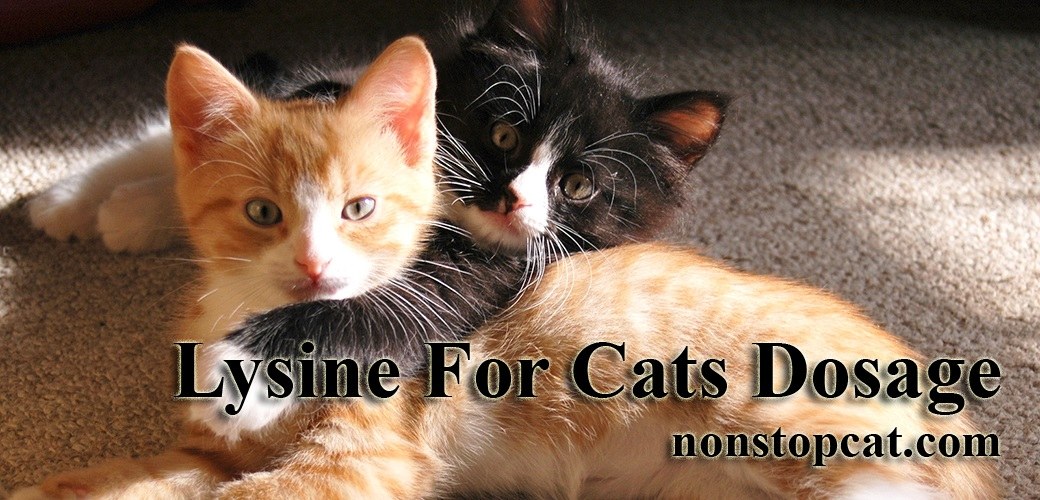 Lysine For Cats Dosage