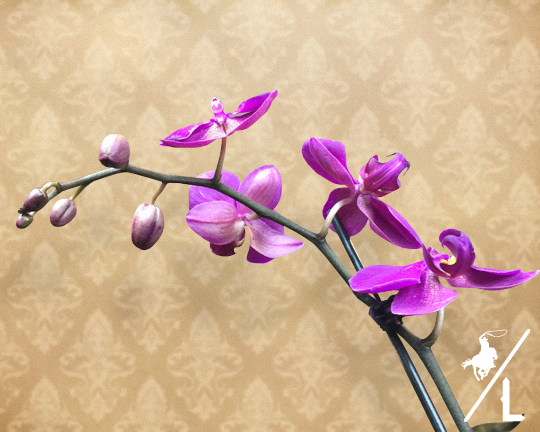 Live Orchid
