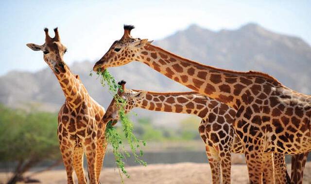 معلومات عامة عن الحيوانات هل تعلم,  معلومات عن الحيوانات والطيور,  معلومات غريبة ومضحكة عن الحيوانات,  معلومات مضحكة عن الحيوانات,  معلومات مخيفة عن الحيوانات,  معلومات غريبة عن الثدييات,  هل تعلم عن الانسان,  معلومات عن الحيوانات المفترسة,  حيوانات غريبة,  اغرب الحيوانات