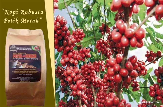 "Bengkulu Mountain Coffee ""Kopi Robusta Petik Merah"""