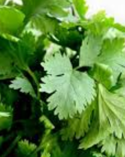 Cilantro meaning in tamil, telugu, marathi, kannada, malayalam, in hindi name, gujarati, in marathi, indian name, english, other names called as, translation