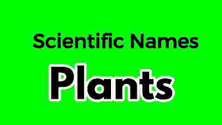 50+ Scientific Names Of Plants , 50+ Scientific Names Of Plants
