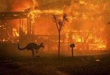 Australia fires killed 46,000 koalas