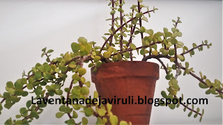 arbol-de-la-abundancia