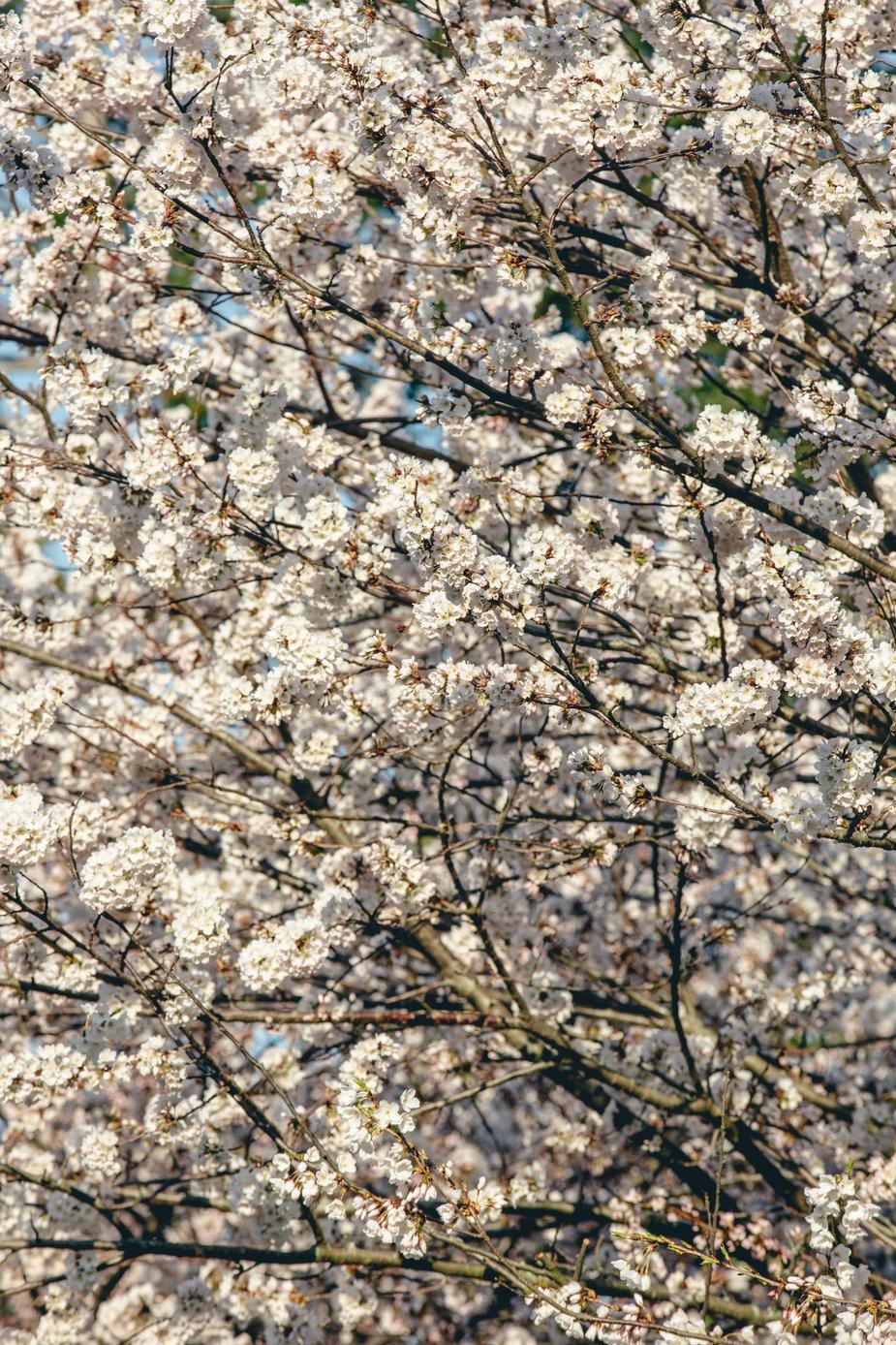 Wallpaper Of Flower Hd