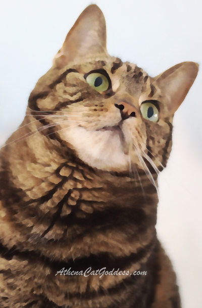 tabby cat with head tilted to the side staring up