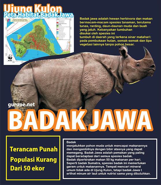 Contoh poster yang menjelaskan segala informasi yang berhubungan dengan badak jawa