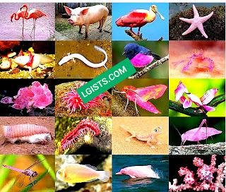 Flamingo pink animals