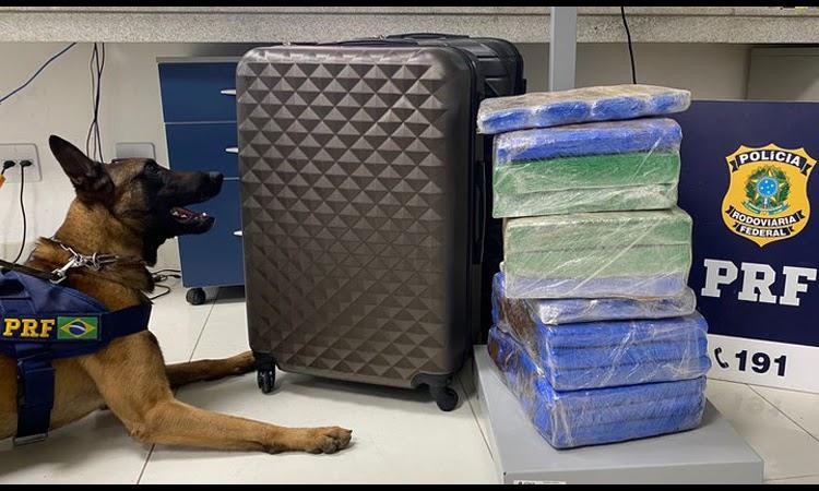 Polícia encontra mais de 31 kg de maconha em ônibus de turismo no Sudoeste da Bahia