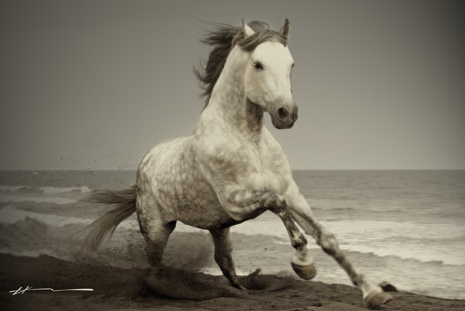 Wild Horses HD Wallpapers