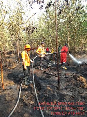 Ratusan Hektar Terbakar, Hot Spot di Tebo Terpantau 39 Titik