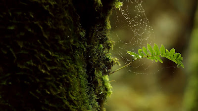 Nature, tree trunk, moss, cobweb, macro