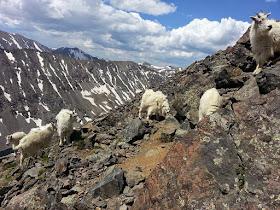 Quandary peak,  Colorado