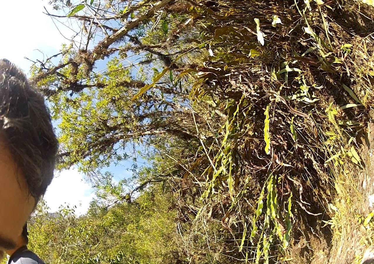 Chapéu perdido na subida do Huaynapicchu.