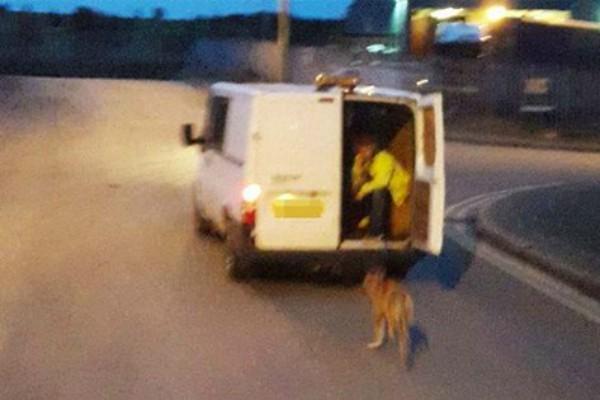 Καταγγελίες για «απαγωγή» αδέσποτων σκυλιών στην Καβάλα!