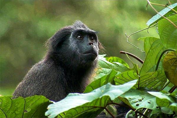 Flora Taman Nasional Siberut