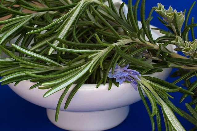 a bunch of rosemary in a pot
