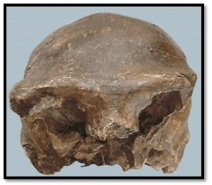 All About Student Manusia Purba Pithecanthropus Mojokertensis