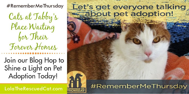 Remember Me Thursday|Tabby's Place