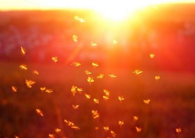 Nuovo metodo per studiare fenomeni collettivi: valzer moscerini