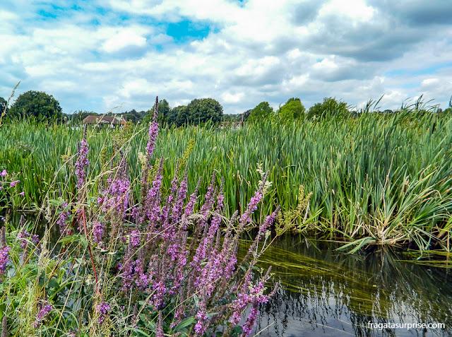 Vegetação e riacho às margens da trilha entre Winchester e o Hospital of Saint Cross