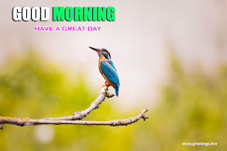 Beautiful kingfisher Bird greetings good morning messages
