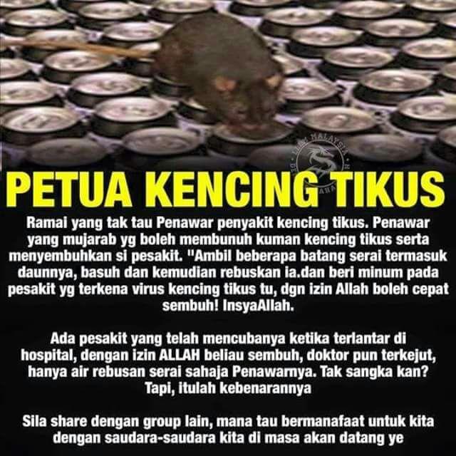 petua kencing tikus, cara merawat kencing tikus, bahaya kencing tikus, penawar kencing tikus,