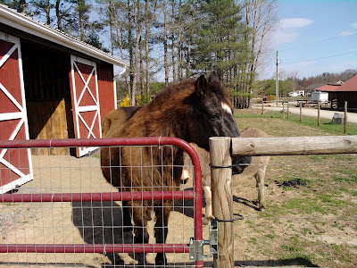 big black horse by a gate and barn