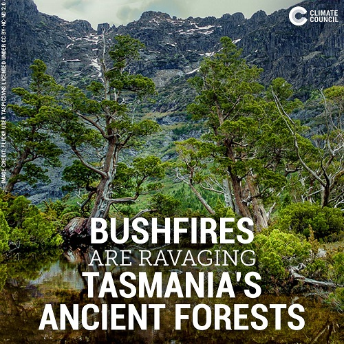 "Poster of the Week - ""Bushfires Are Ravaging Tasmania's Ancient Forests"" (Credit: Climate Council)"