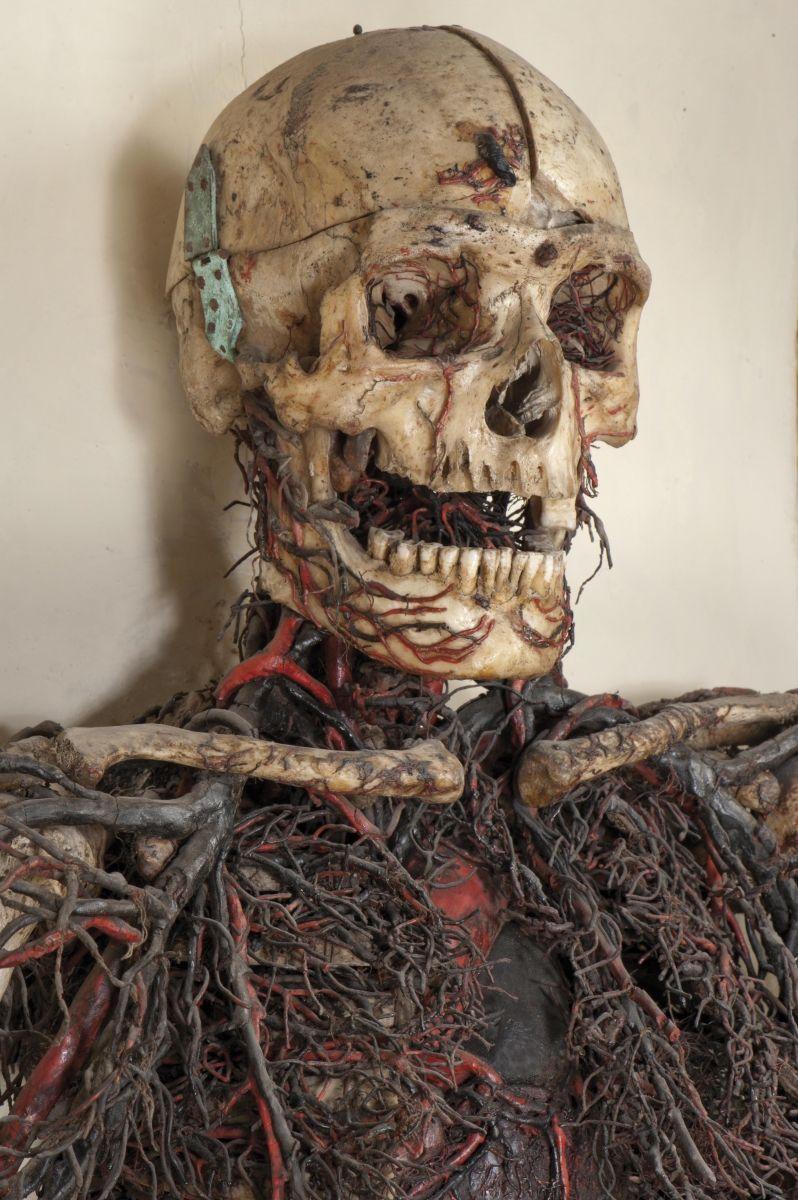 Anatomical Machines