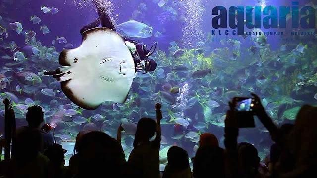 aquaria KL,AQUARIA KUALA LUMPUR