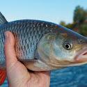 Benarkah Ikan Membusuk Mulai Dari Kepala ?