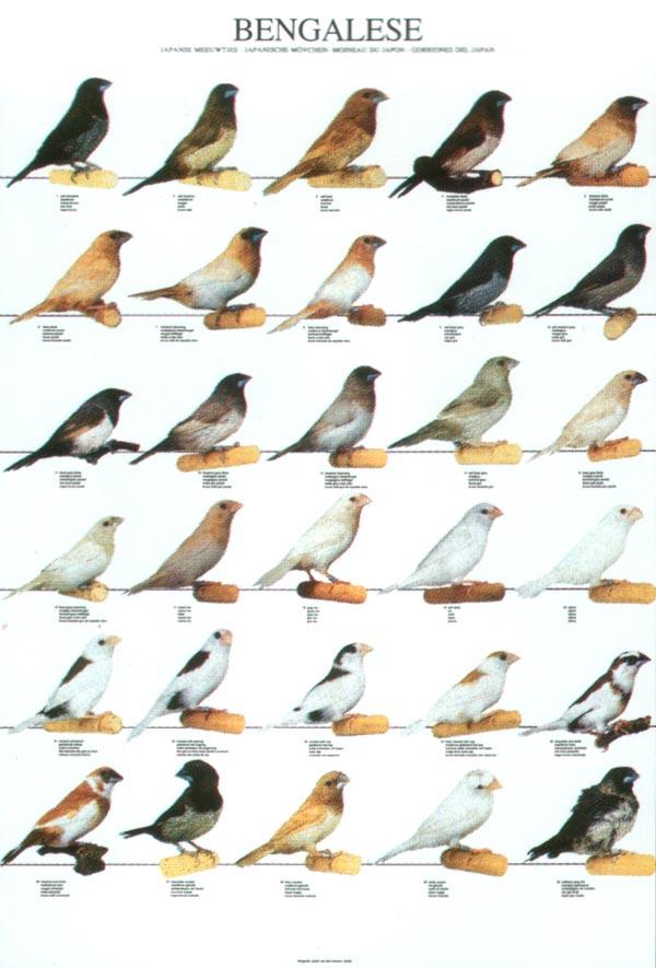 pierderea în greutate a cuibului de păsări)