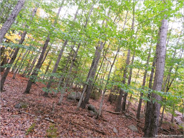Bosque en el Parque Nacional Acadia en Maine