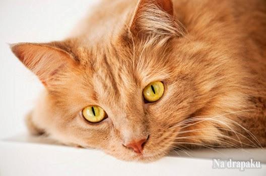 Wrodzone i nabyte zachowania kotów