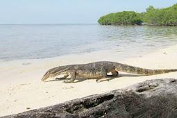 Pulau Biawak, Salah Satu Tujuan Wisata Utama Indramayu