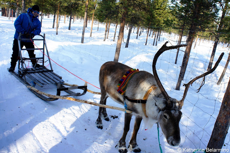 Reindeer Sledding Instructions Outdoor Winter Activities in Sweden's Lapland
