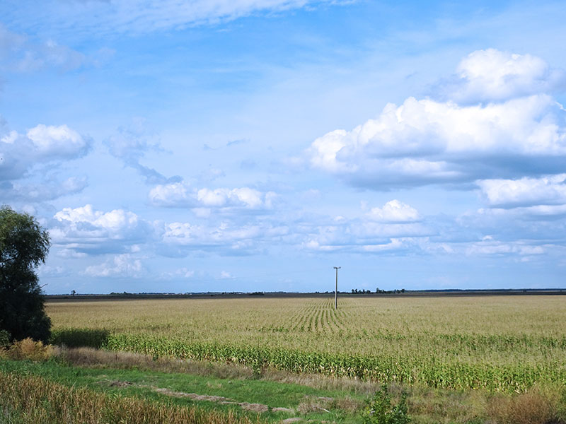 Great_Hungarian_Plain_Field_Berettyo