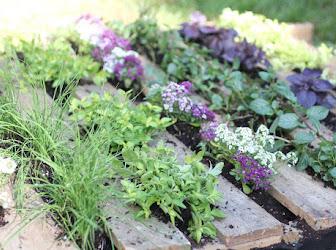 Palets con flores y plantas