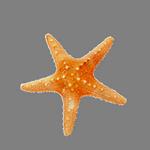 starfish in spanish
